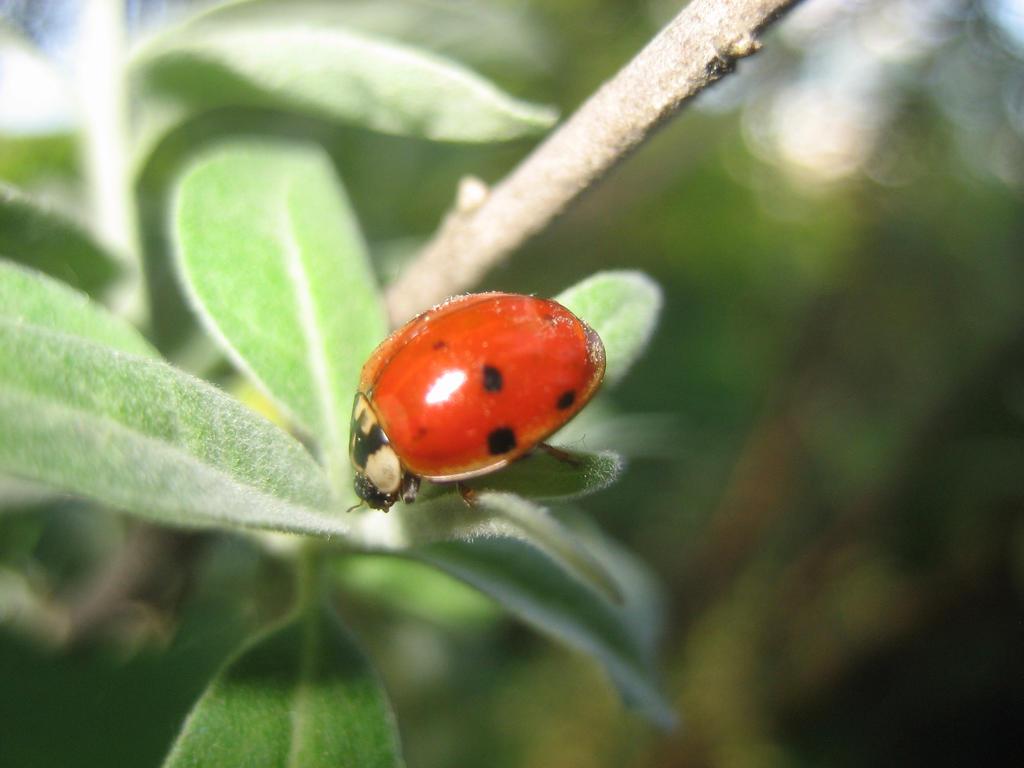 Ladybird by Natsu-chan-94