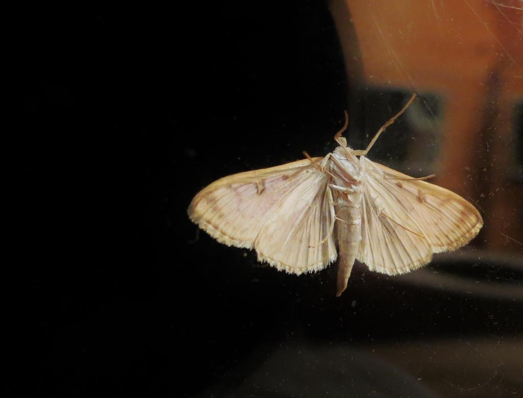 moth by doctorwhonicorn