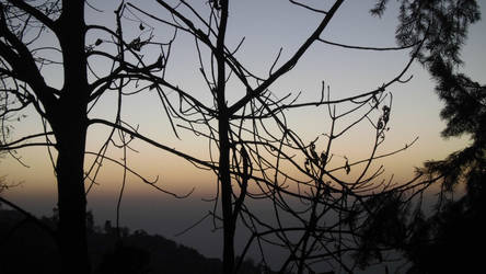 shaded evening