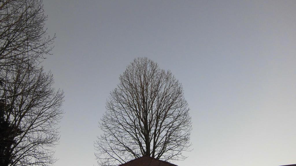 the tree by zahidnabi