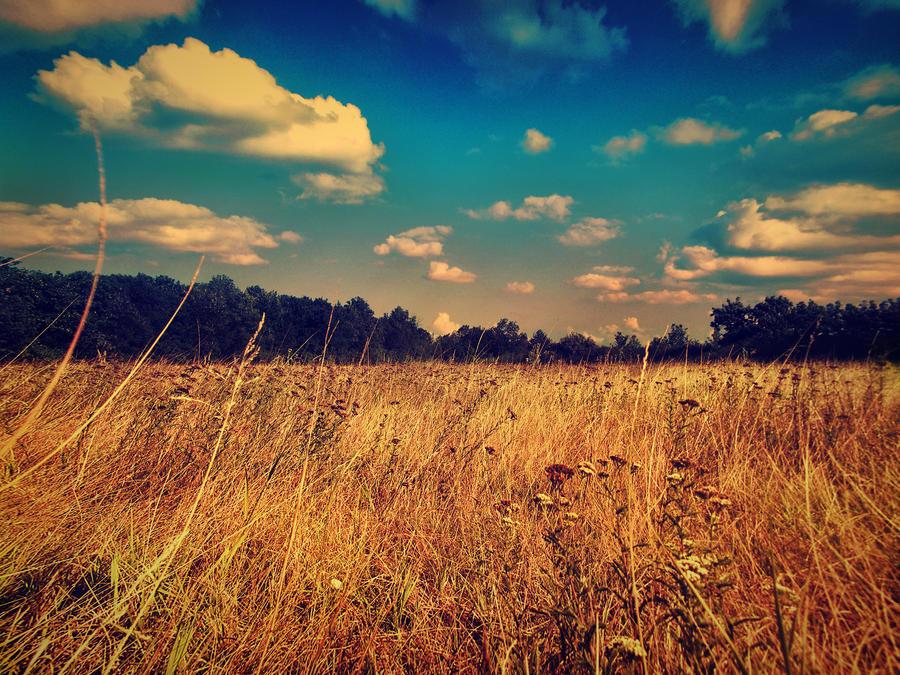 field by stevenfields