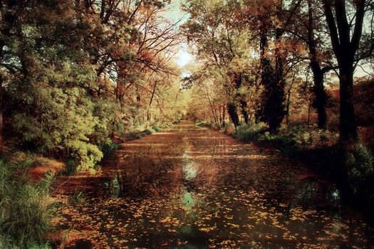 Magical autumn by stevenfields