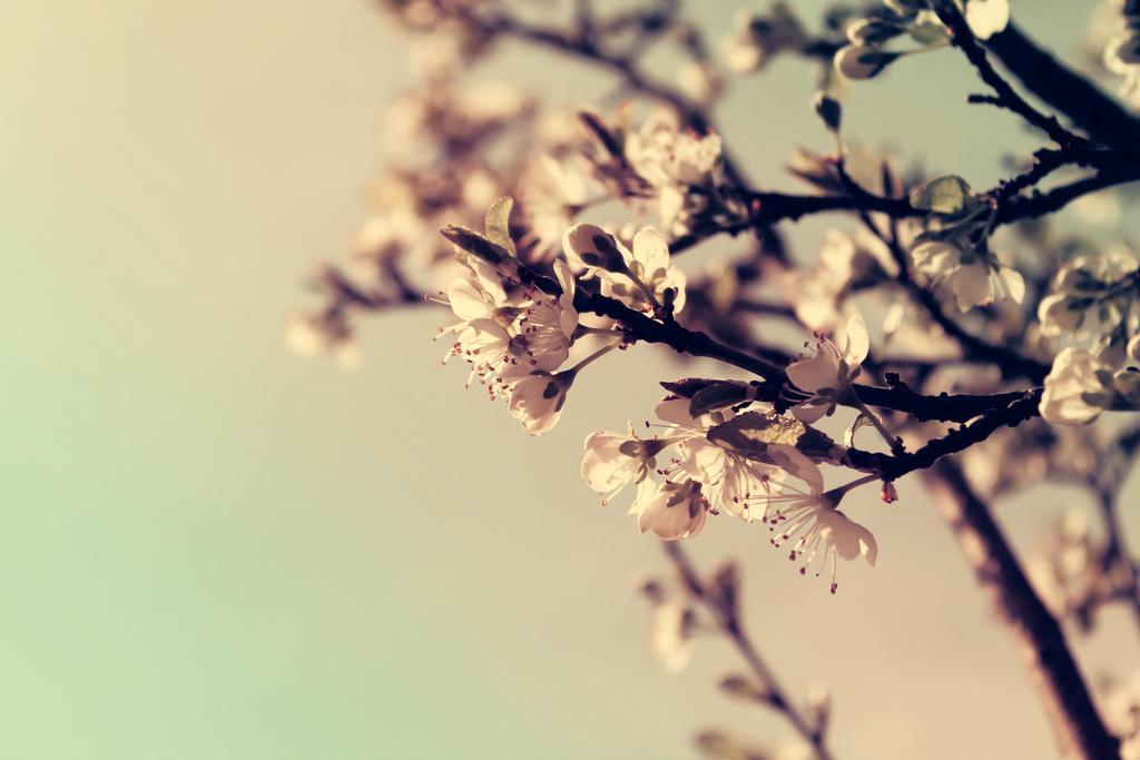 spring by stevenfields
