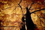 gold tree by stevenfields