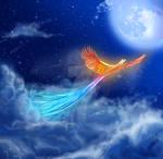 the sublime phoenix