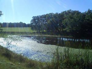 The Back Pond