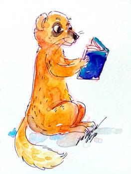 1421668 Yellow mongoose