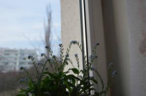 Flower in window by frolka