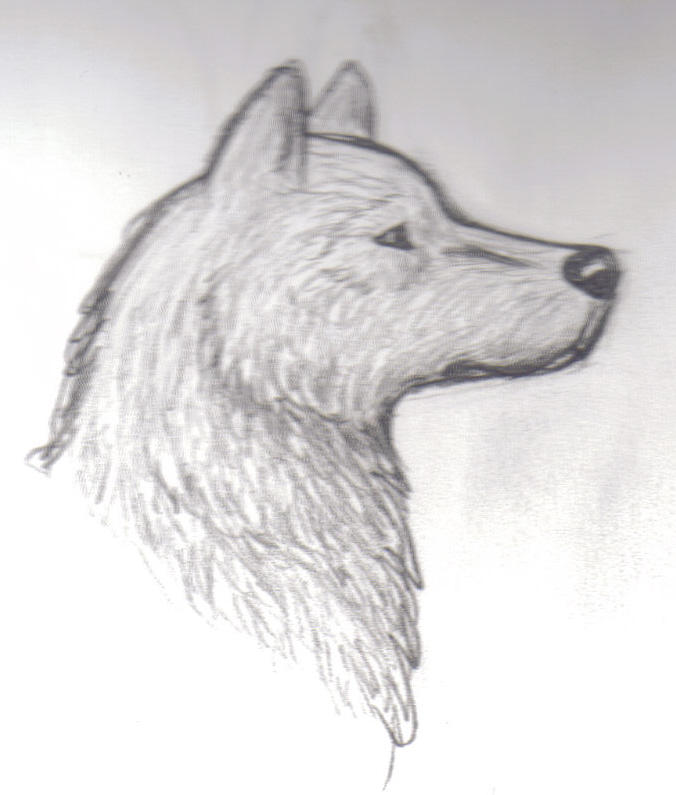 wolf head 2 by Howling-Wolf on DeviantArt Easy Wolf Head Drawing