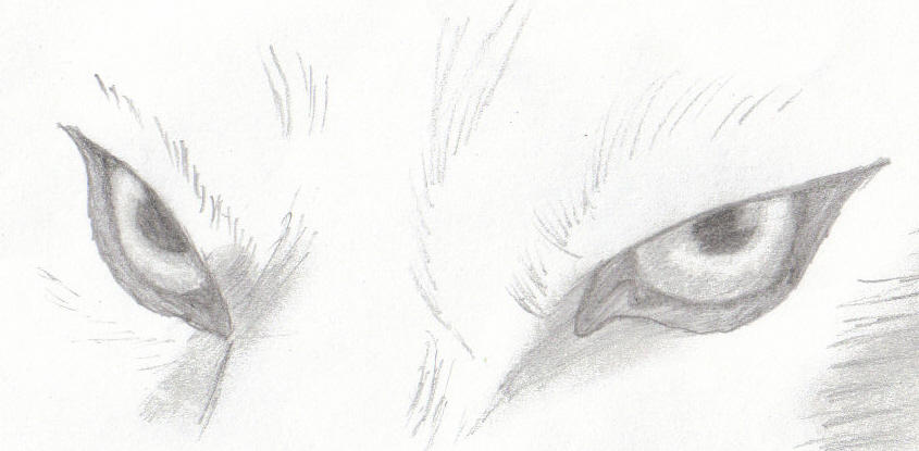 Wolf eyes by cunnucks eh on deviantart wolf eyes by cunnucks eh ccuart Image collections