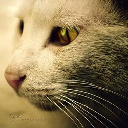 Cats II by nowaryesblack