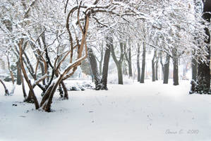 iarna lui februarie by littleshyangel