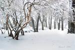 iarna lui februarie