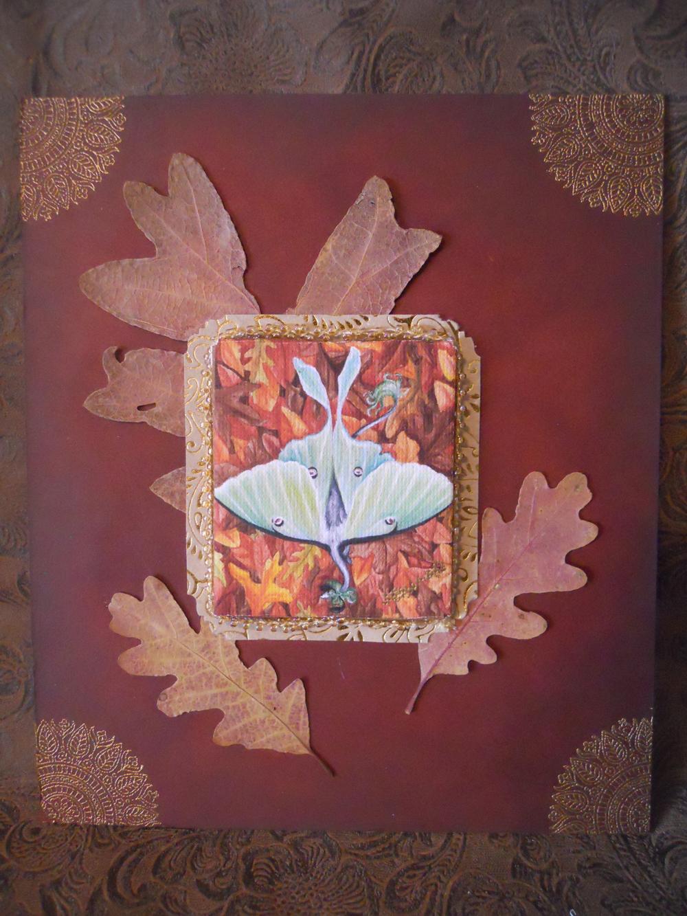 Canvas print of Lunar Moth Toku by JessicaMDouglas