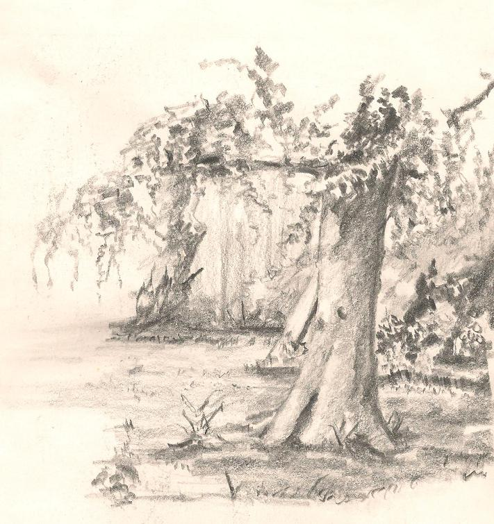How To Draw Trees With Pencil Tree Drawing By
