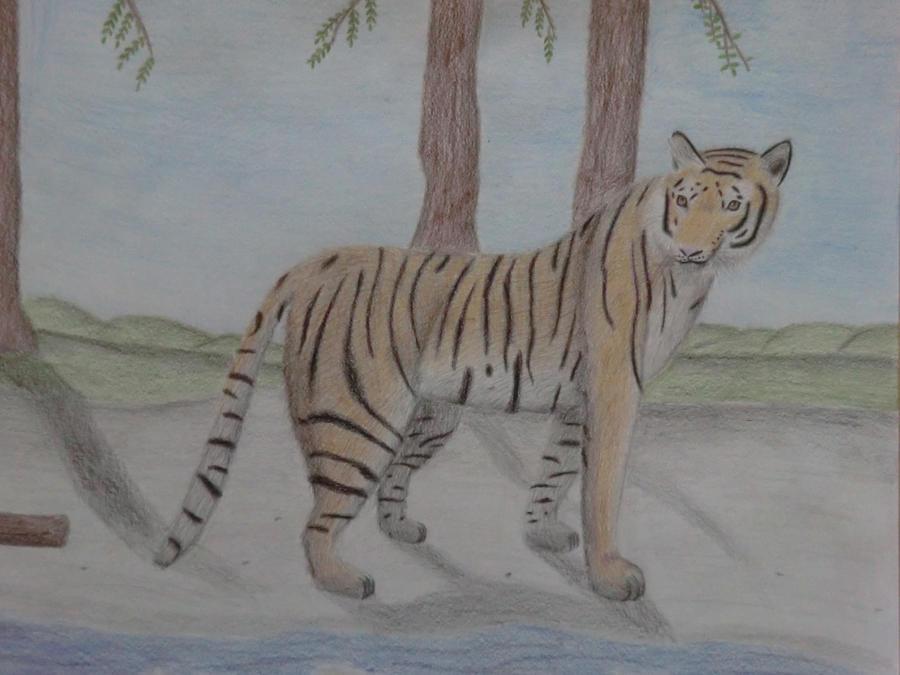 The tiger by Hawkbit