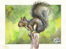 Watercolor Squirrel by Zerochan923600