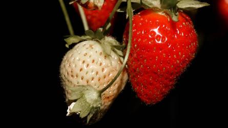Erdbeeren , Strawberries