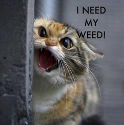 weed cat by rumper1