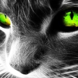 Siamese-kitty's Profile Picture