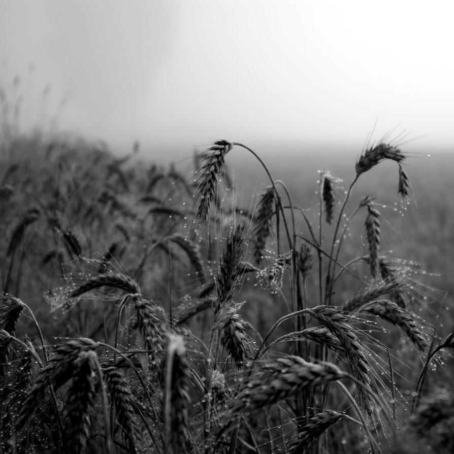 Crop by dn1w3r