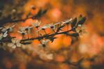Autumn in spring