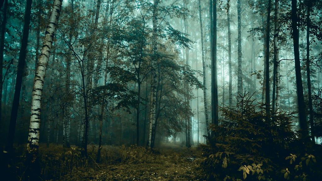 Mystic forest by dn1w3r