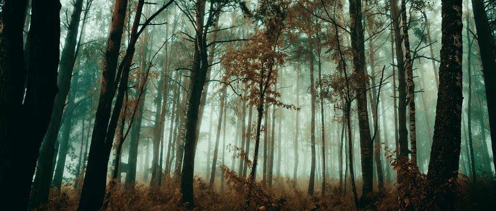 Autumn atmosphere by dn1w3r