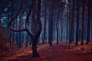 Enchanted by HendrikMandla