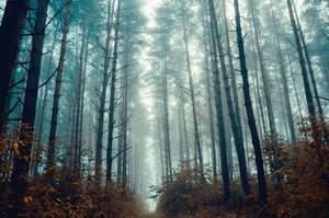 Misty morning by HendrikMandla