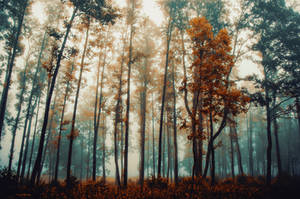 The colors of fall by HendrikMandla