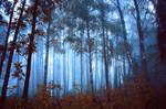 Cold autumn