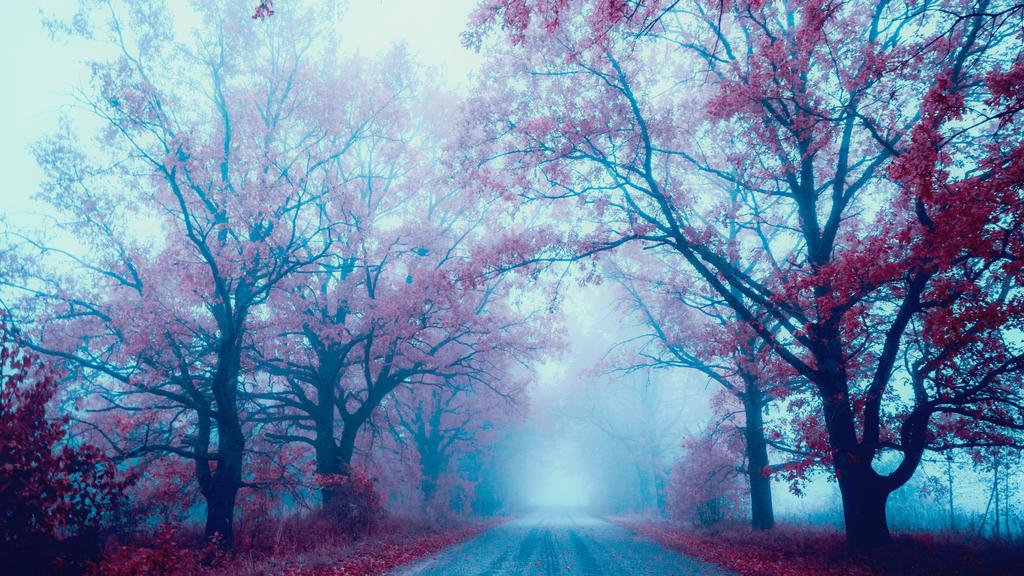 Dreamy by dn1w3r
