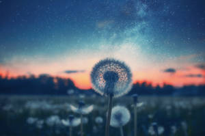 Dream of summer by HendrikMandla