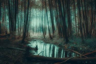 Follow the stream by HendrikMandla
