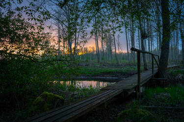 Forest sunset by HendrikMandla