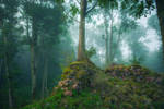 Forest and ruins