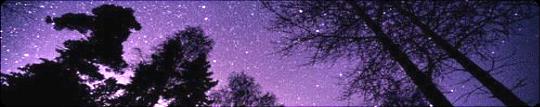 starry forest night divider f2u