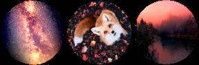 artsy fox circle divider by cal-vain