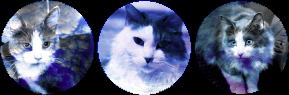 happy house cats circle divider by cal-vain