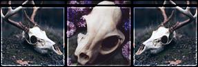 animal skull divider f2u