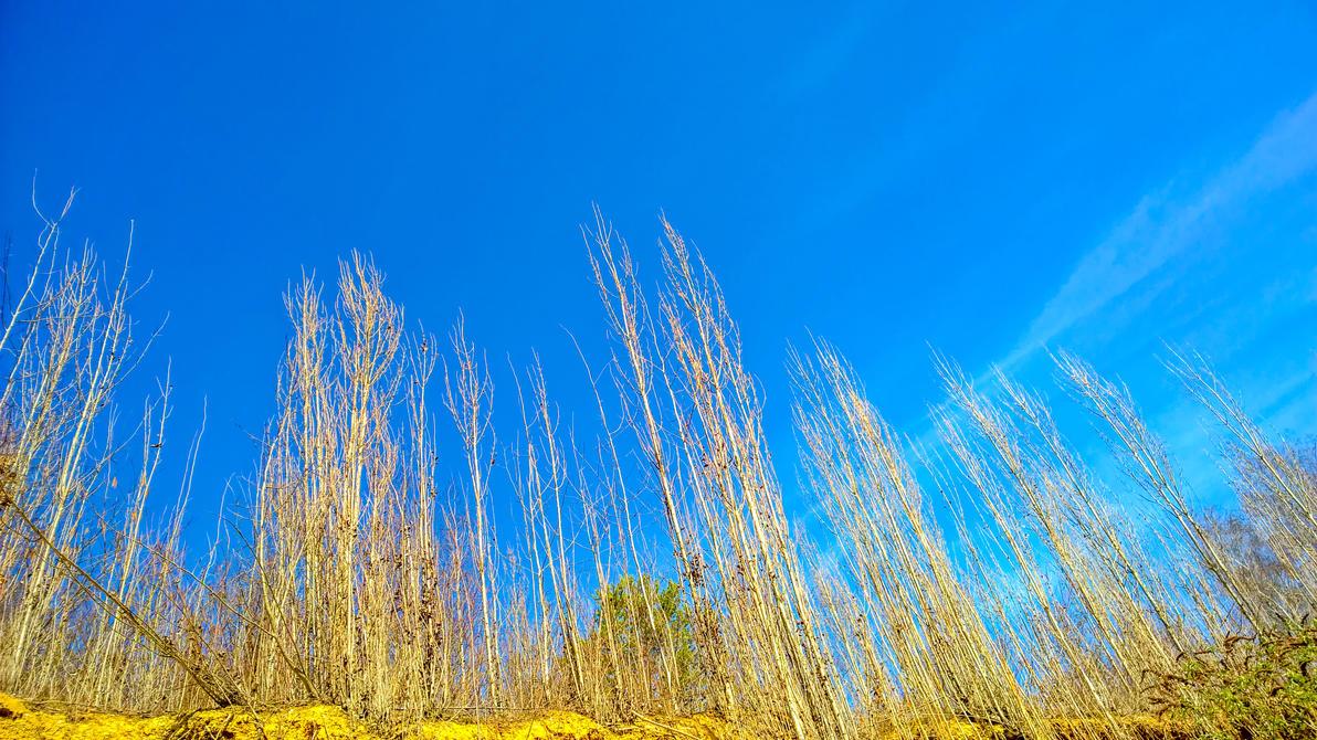Trees to the Sky by megadantron