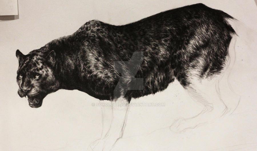 wip *panther* by SokolovaJu