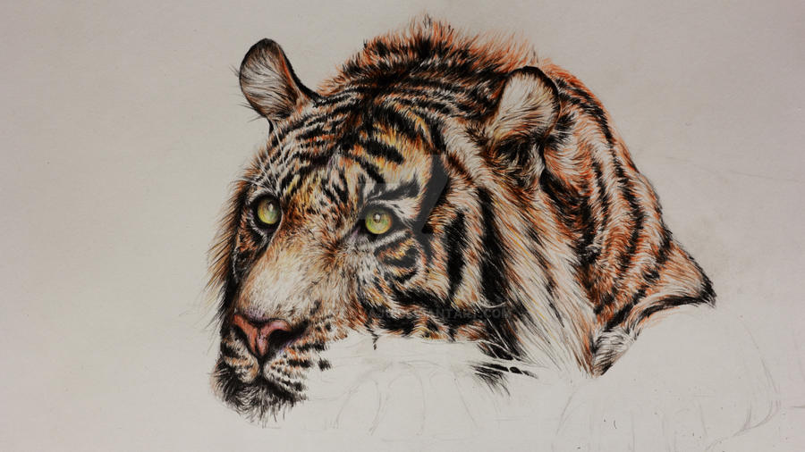 wip *tiger #8* by SokolovaJu