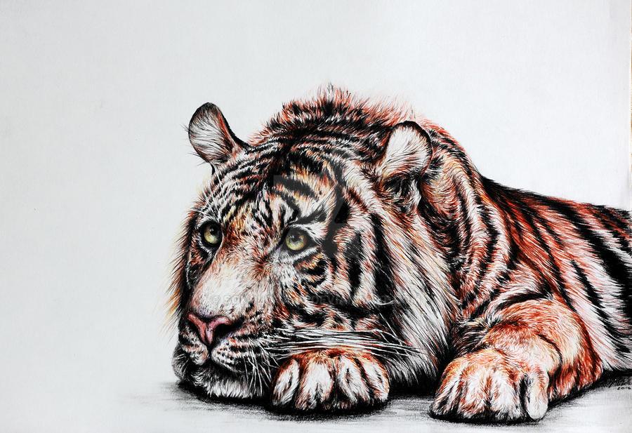 Tiger #8 by SokolovaJu