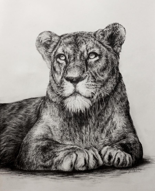 lioness #2 by SokolovaJu