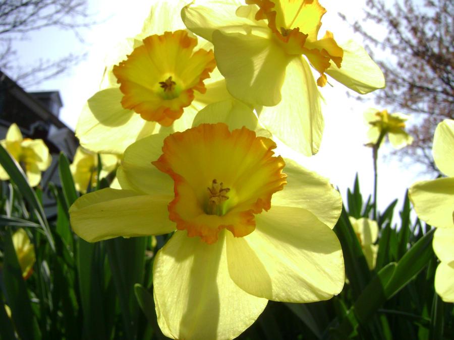Sunny Flowers by spotnick97