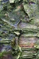 Unsilver Birch 2 by joannastar-stock
