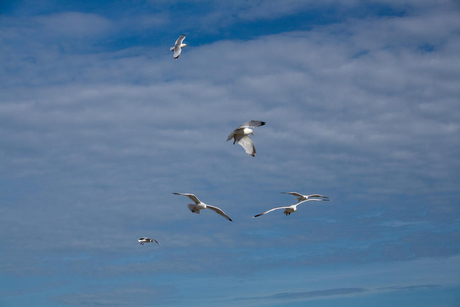 Flying gulls 5 by joannastar-stock