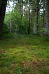Woodland 50